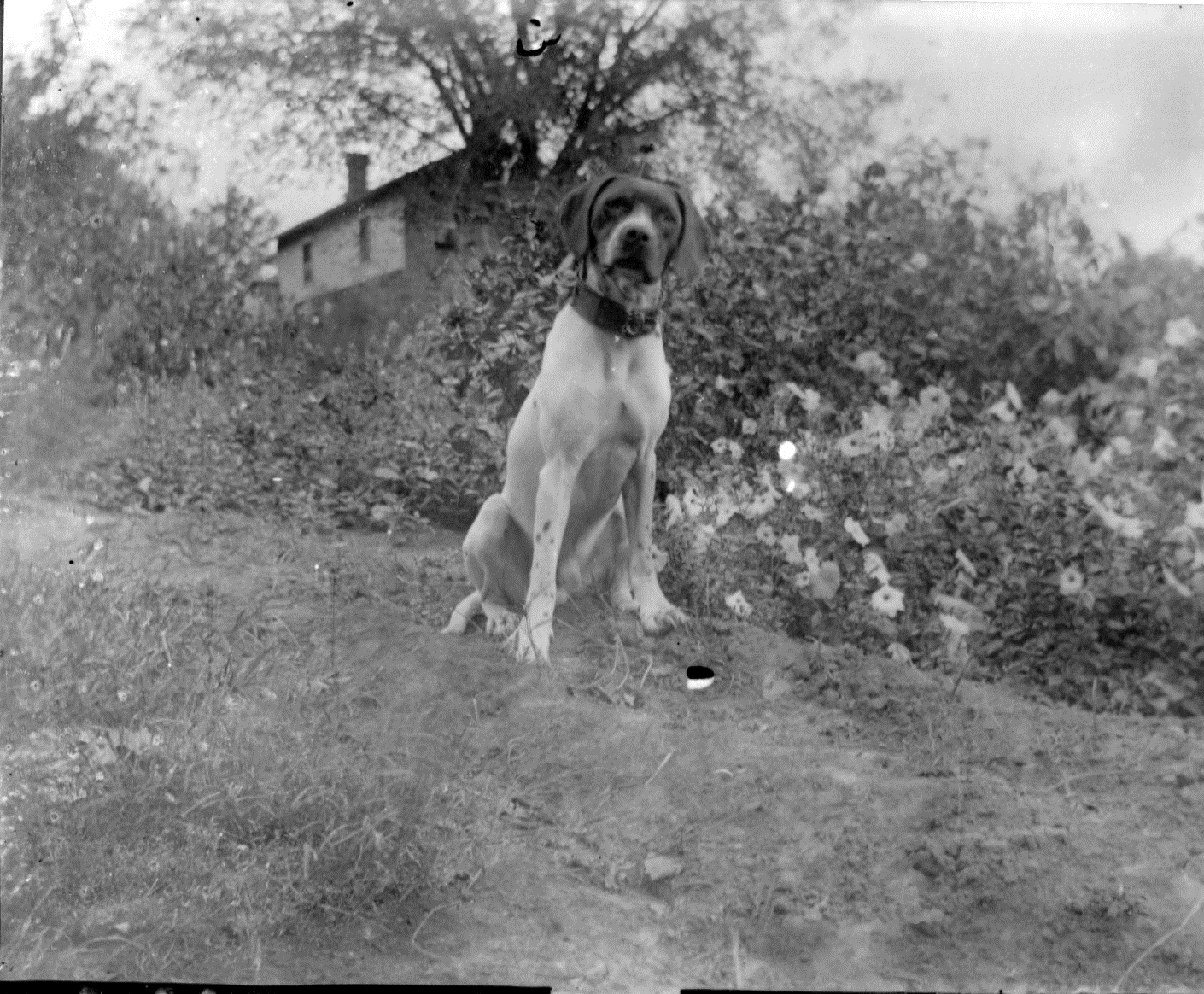 photo of Canine