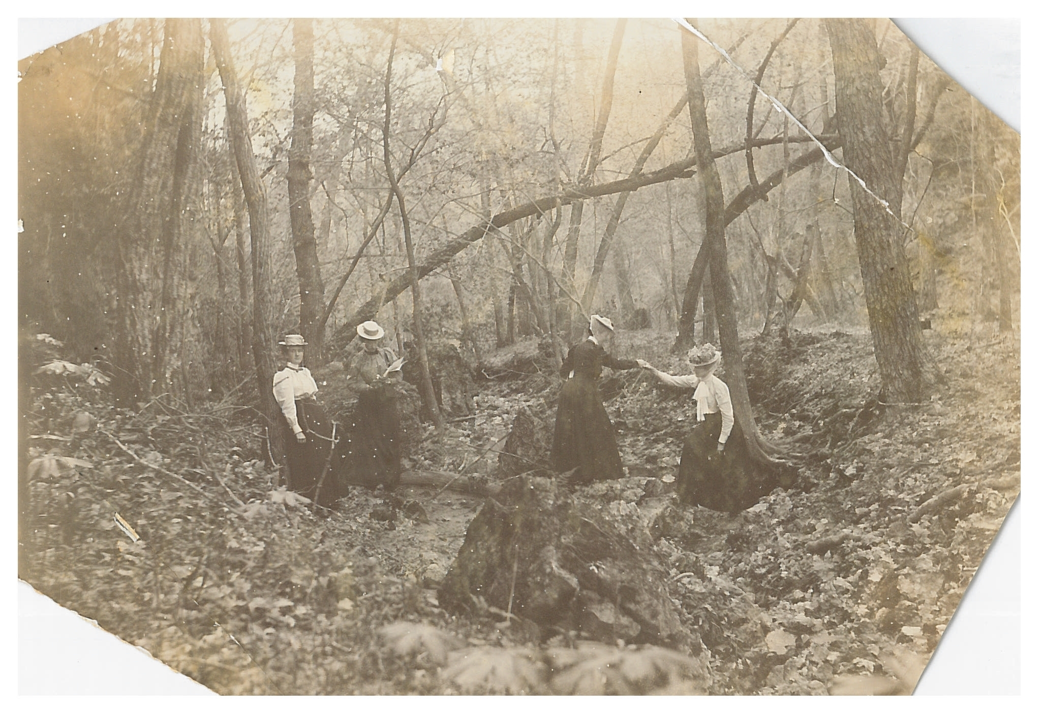 photo of Cornell Students Working at Palisades Kepler Park