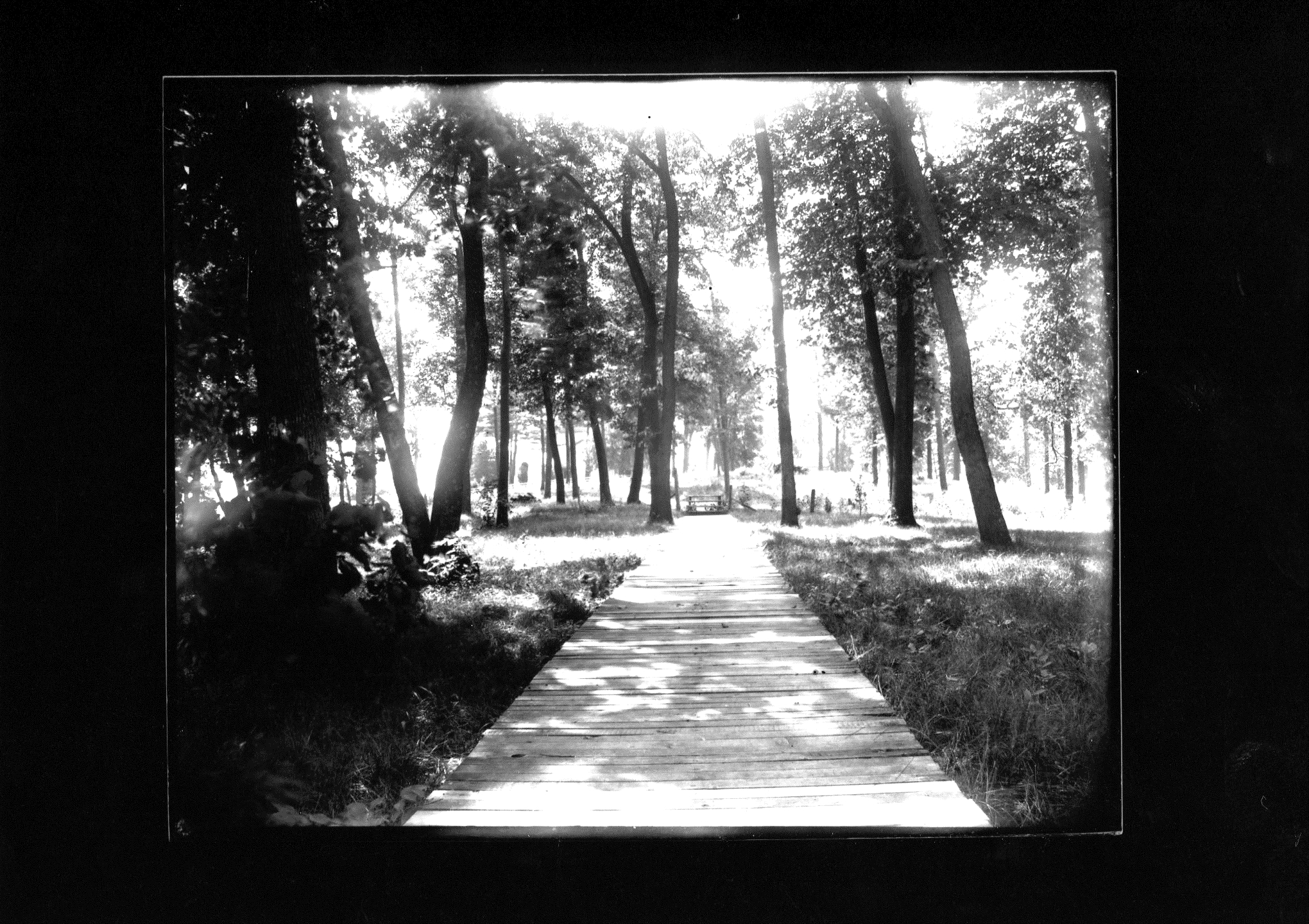 photo of Boardwalk into a Forest