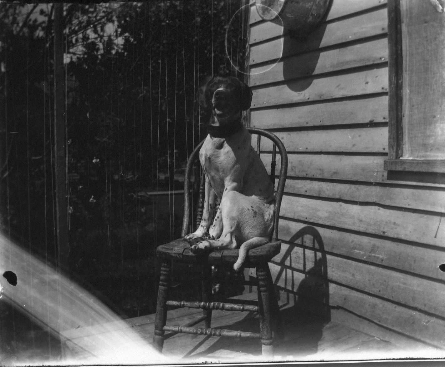 photo of Dog in a Chair