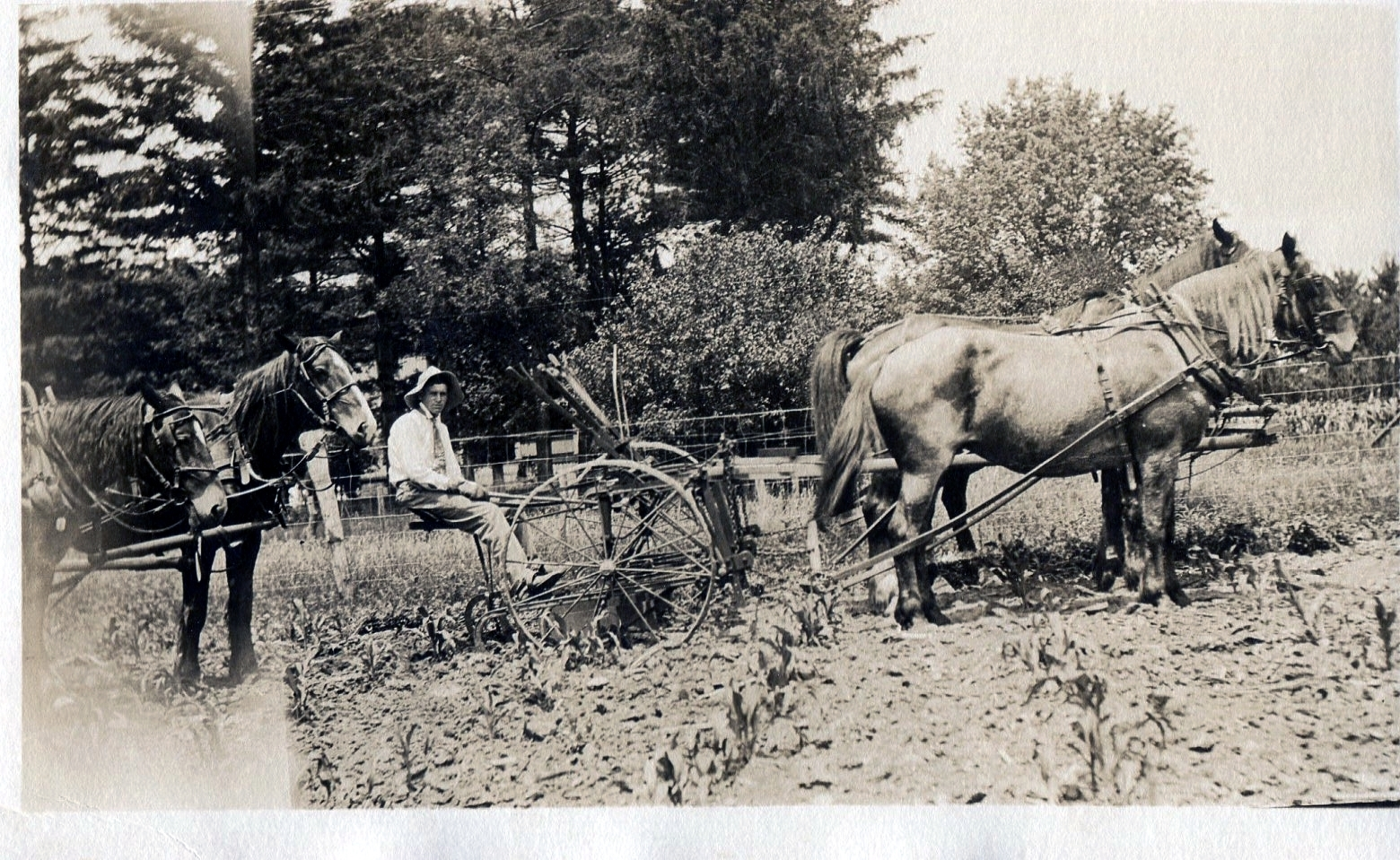 photo of Unidentified Farmer