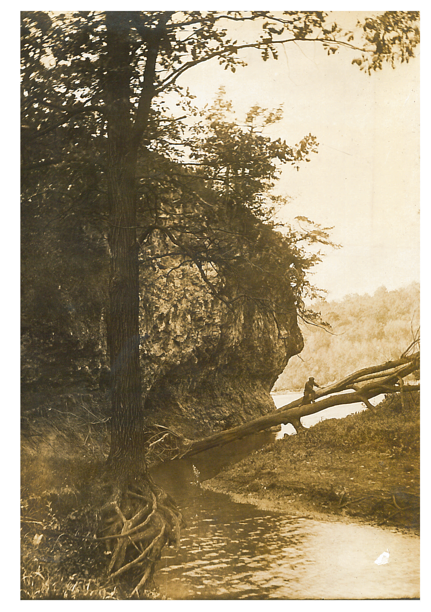 photo of Unidentified Person Climbing on a Fallen Tree