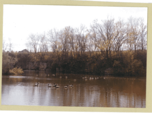 Body of water with several waterfowl on it, surrounded by trees in their fall foliage