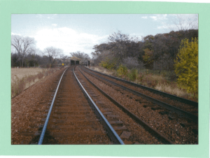Railroad tracks surrounded by trees and prairie grass.