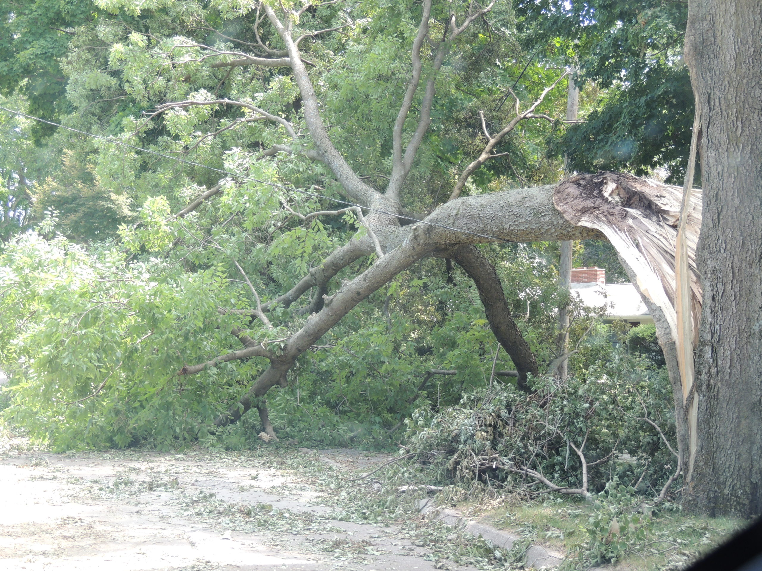 Photo of fallen tree branch