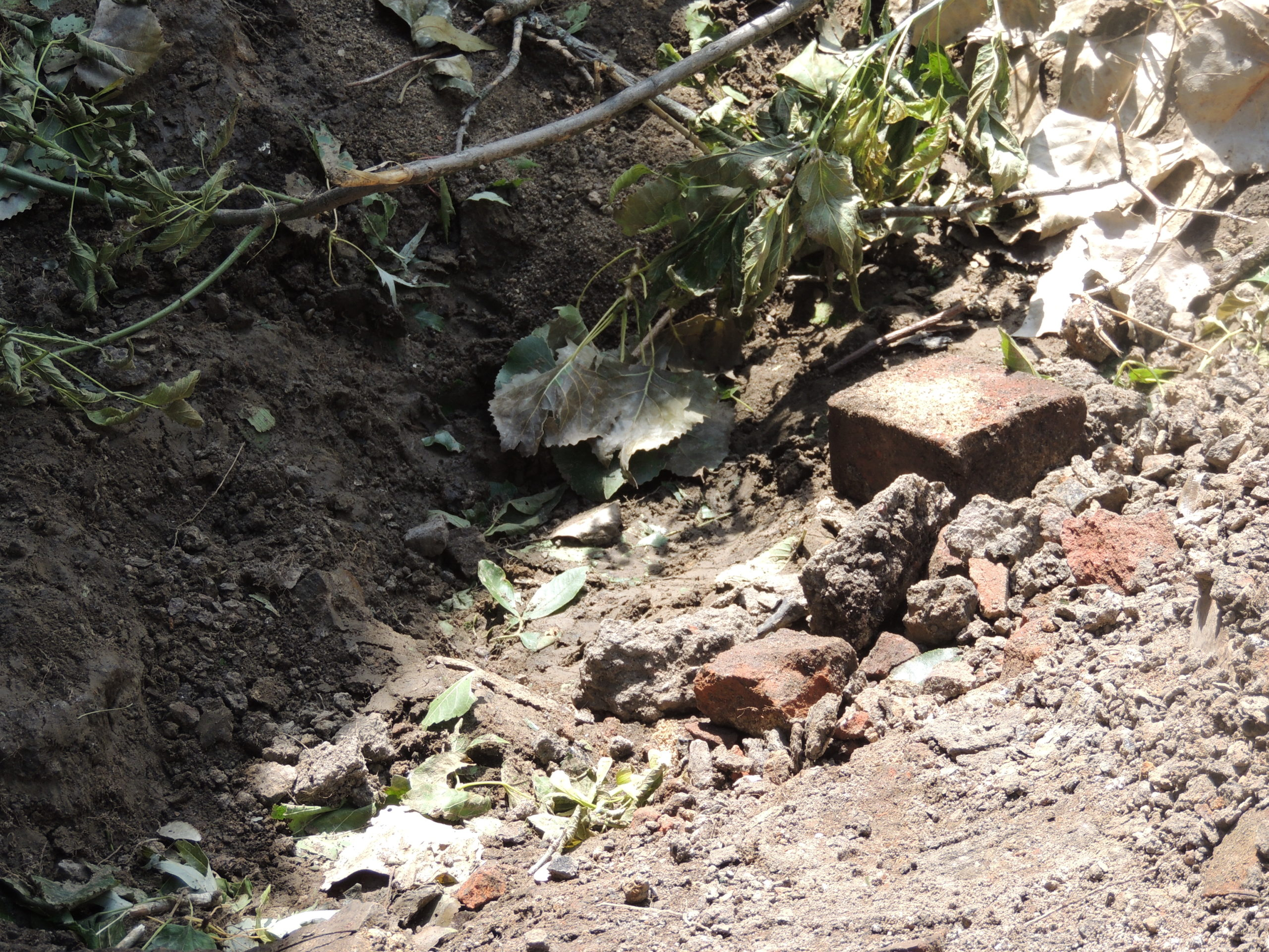 Photo of uprooted tree debris